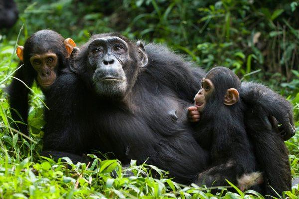 Rwanda-Primates-Tour