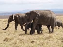 masai mara4