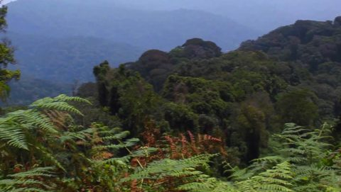 Nyungwe Forest | Volcanoes