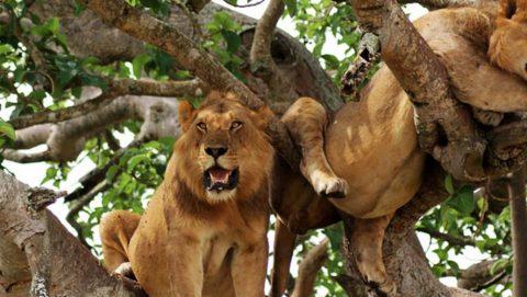 4 Day Ngorongoro Safari